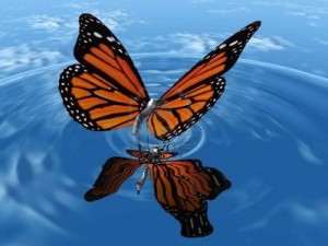 Butterfly-High-Resolution-Photo-460aa08